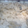 Dino Graveyard